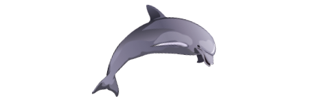 img-dolphin